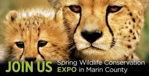 WCN-Spring-Expo