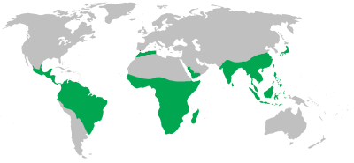 Non-human primate range map © Maphobbyist/Wikipedia